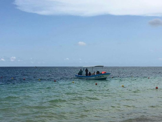 Live Puerto Morelos