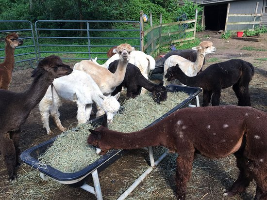 New Milford, كونيكتيكت: Feeding time for the boys