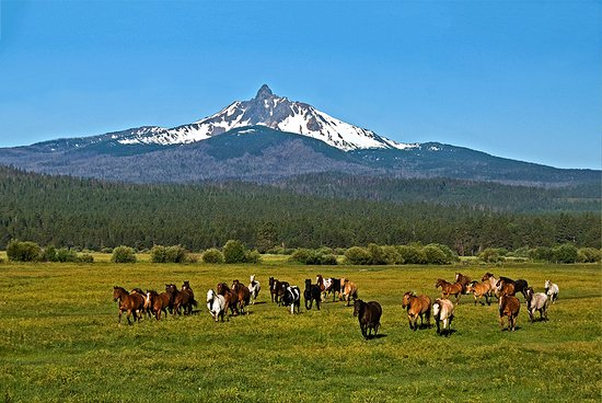 Black Butte Ranch, OR : Horses on their way to work at the Ranch