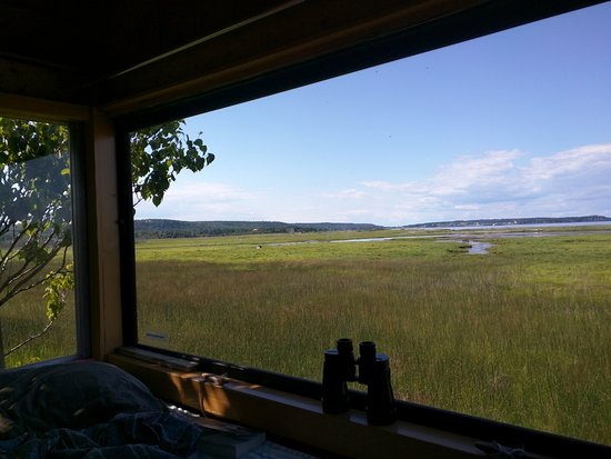 Castalia Marsh Retreat : View from the loft bed in the Birdhouse