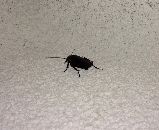 Oceanside Hawks Nest Motel: Cockroach in the living room