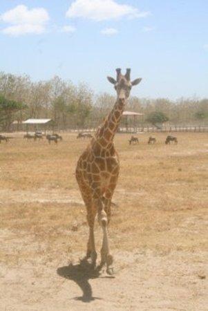 Africa Safari: photo0.jpg
