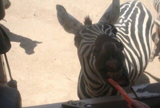 Africa Safari: photo1.jpg