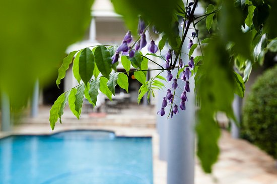 10 2nd Avenue Houghton Estate: Poolside Wisterias