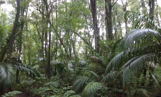 Whakatane, Nueva Zelanda: White Pine Bush Reserve