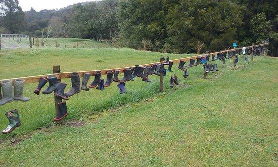 Whakatane, New Zealand: Gumboot fence near White Pine Bush Reserve