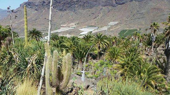 Dunas Cactus Garden