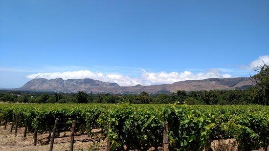 Constantia, แอฟริกาใต้: vineyards