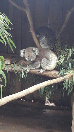 images ballarat wildlife - photo #9