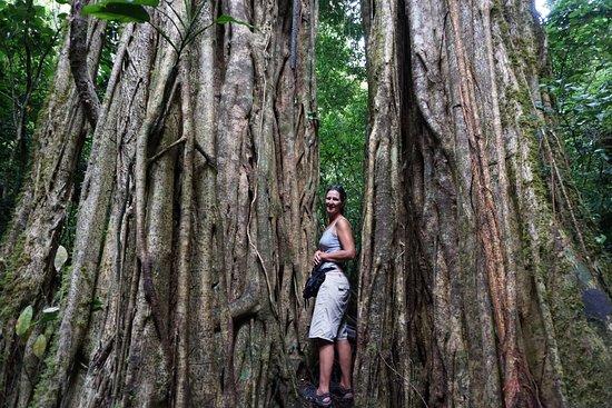 Provincia de Chiriquí, Panamá: Nearby Hike