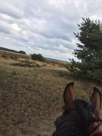 Provincia de Güeldres, Países Bajos: Deze foto is genomen op nationaal park de Hoge Veluwe tijdens een dagtocht toen er een kudde wil