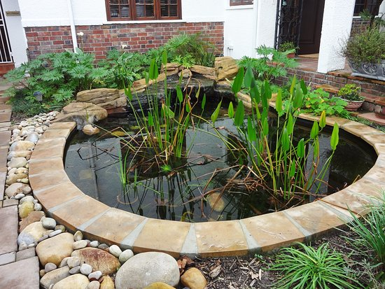 Rondebosch, Sør-Afrika: Fish pond