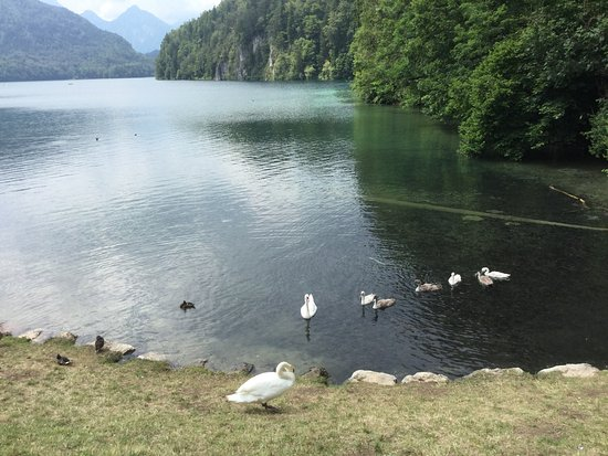 Alpsee: photo0.jpg