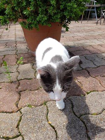 Nitry, ฝรั่งเศส: Friendly cat