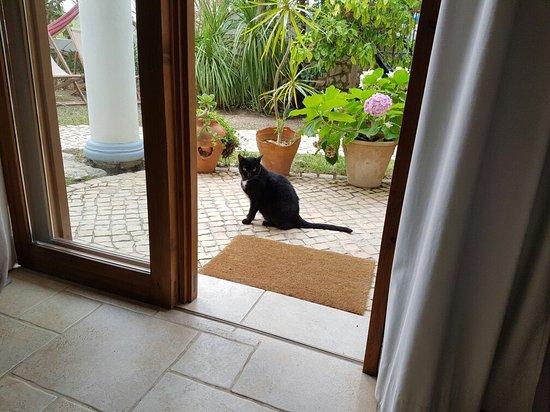 Uma Casa a Beira Sol: 20160729_153324_large.jpg