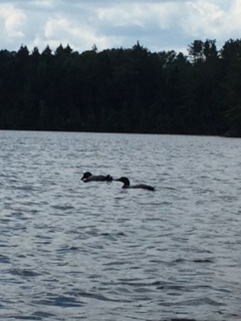 Prong Pond : Great view of some loons