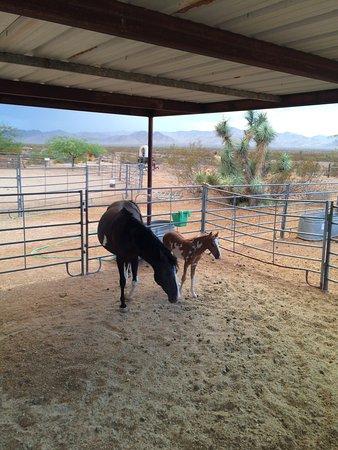 Yucca, AZ: Stagecoach Trails Guest Ranch