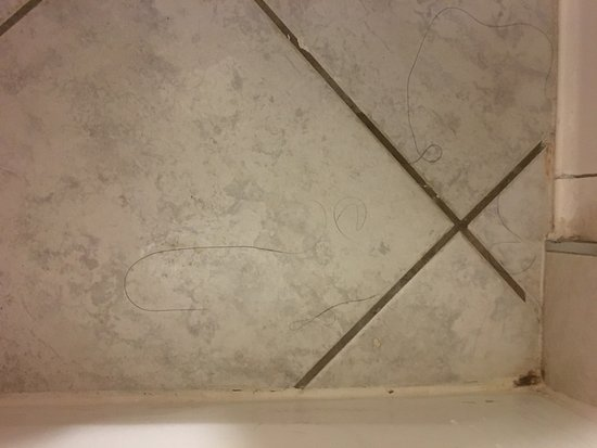 Radisson Hotel Whittier: Hair on floor of bathroom upon checkin
