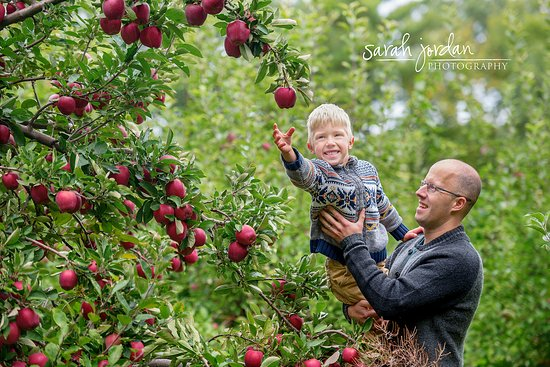 Apple Picking At Smolak Farms Picture Of Smolak Farms North Andover Tripadvisor