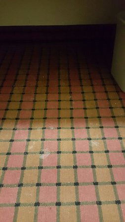 Ruston, LA: Will not stay again...Roaches and white stains on carpet looking like some type of body fluid...