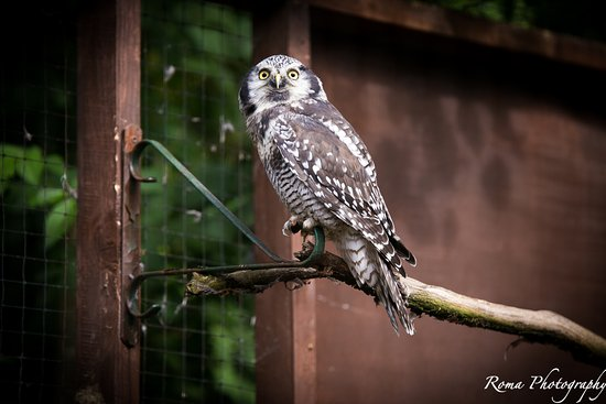 Randalstown, UK: Owl