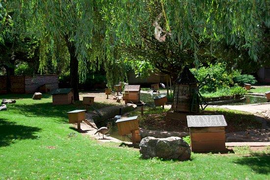 Le Jardin des bêtes : petit décor avec canard, héron et cygne