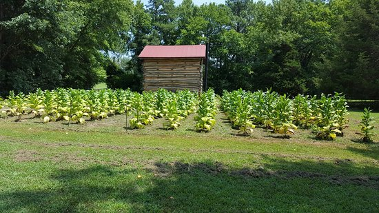 Meadow Farm Museum: 20160806_133458_large.jpg