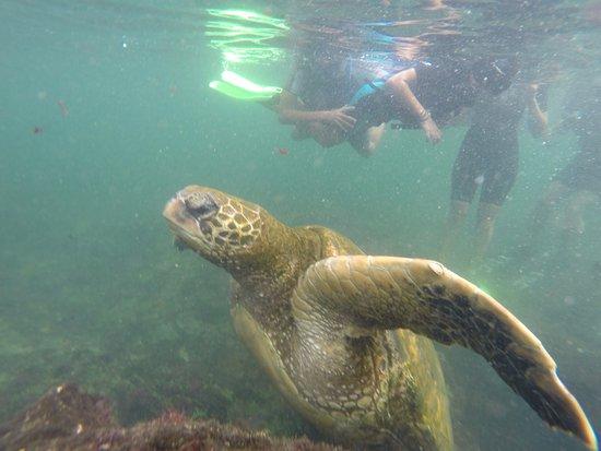 Puerto Villamil, Ekwador: Nadando con tortugas