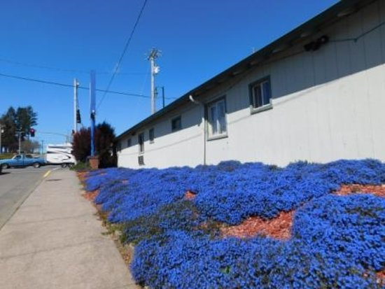Brookings, Oregón: Oak street landscaping