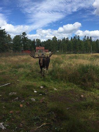 Kosta, Sverige: photo1.jpg