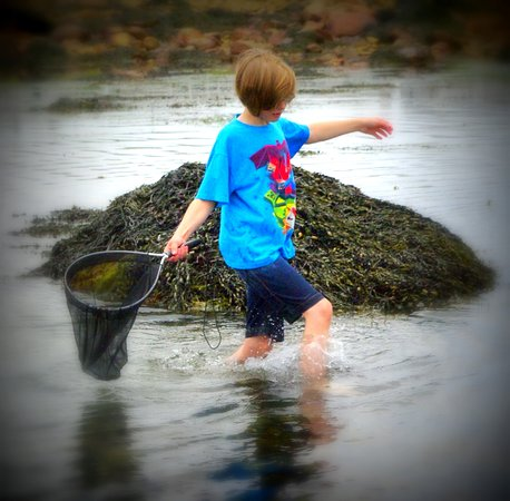 Exploring the Tide Pools in Sandwich!