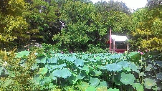 Hsinchu Jingsin Lake
