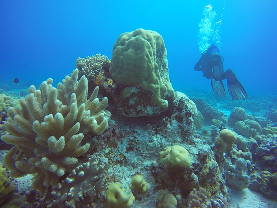Cocos Dive Day Trips: Corals - this place is full of beauty
