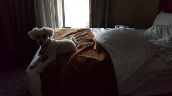 Pratt, KS: our dog loving the comfy bed.