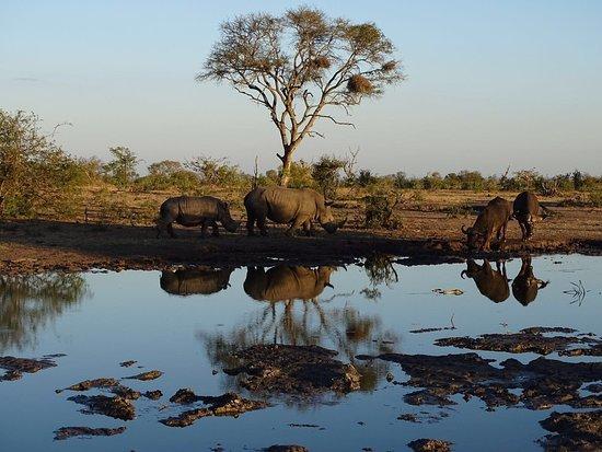 写真Londolozi Pioneer Camp枚