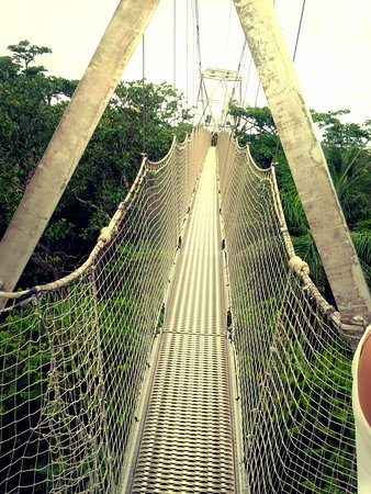Lekki Conservation Centre the canopy walk & the canopy walk - Picture of Lekki Conservation Centre Lagos ...