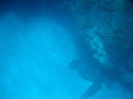 Kayak Olowalu Image