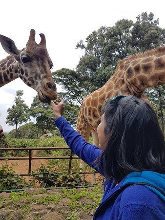 African Fund for Endangered Wildlife (Kenya) Ltd. - Giraffe Centre : photo0.jpg