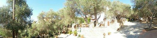 Olive Grove Apartments-Studios: IMG-20160805-WA0054_large.jpg