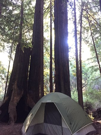 Big Basin Tent Cabins : photo3.jpg
