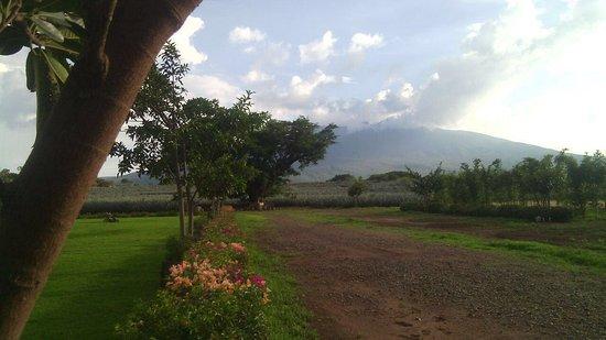 Amatitan, México: Volcan de Tequila