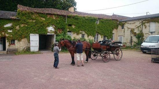 Domaine de l'Enchantoir : getting ready for the carriage ride