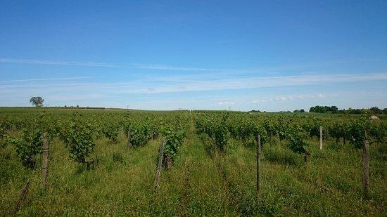 Domaine de l'Enchantoir : what a view!