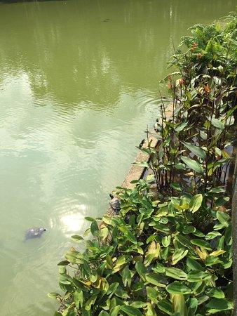 Singapore botanic gardens photo de jardin botanique de for Au jardin les amis singapore botanic gardens