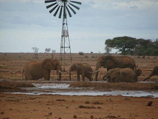 Tsavo National Park East, Kenya: DSC00428_1443447345558_73_large.jpg