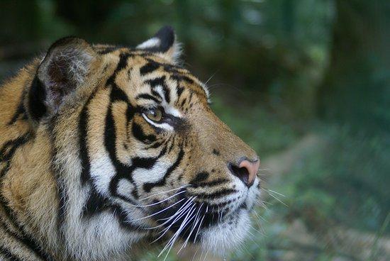 Parc Zoo du Reynou