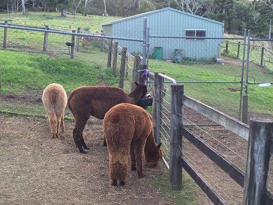 Canungra, Australien: photo1.jpg