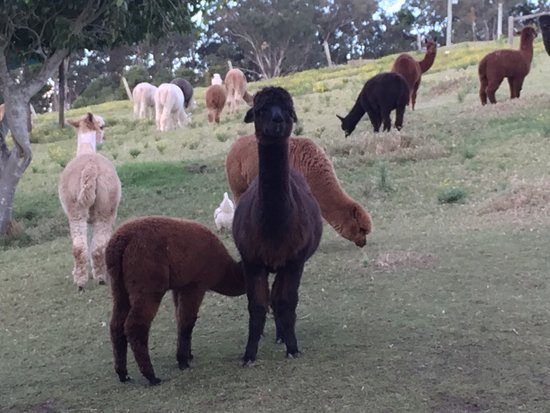 Canungra, Australien: photo2.jpg