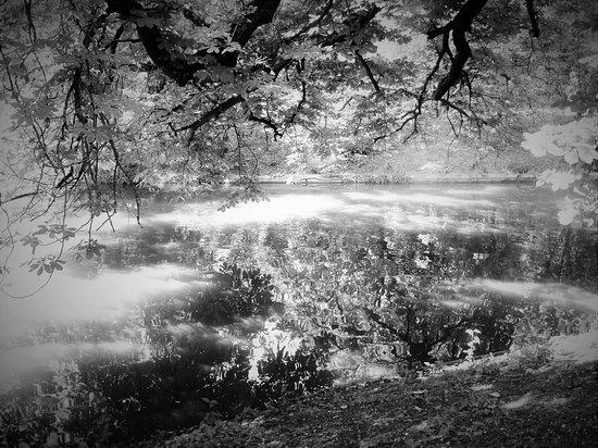 noir & blanc - Photo de Jardin Public, Bordeaux - TripAdvisor