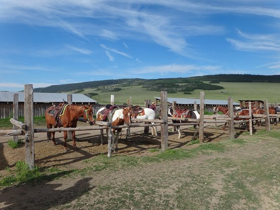 American Safari Ranch: Some of the horses